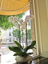 window elegance