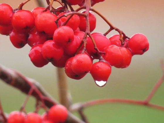 wet berries
