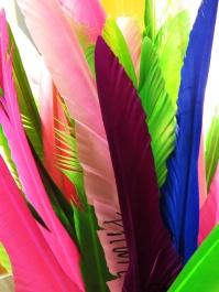 borrowed feathers