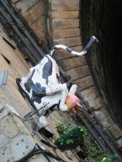 cow gate detail