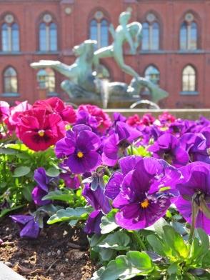 city hall beauties