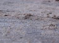 sand and wood