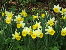 spring happy