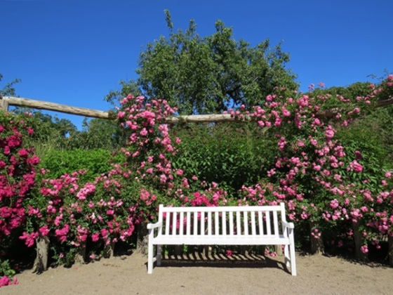 one of many benches