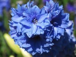 so pretty in blue
