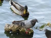 pond-friends