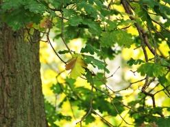 autum-leafs