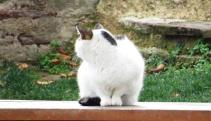 cat-didnt-like-the-camera