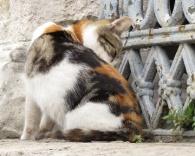 cat-featured