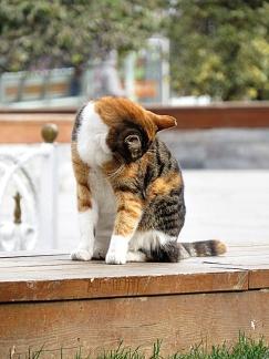 cat-morning-wash