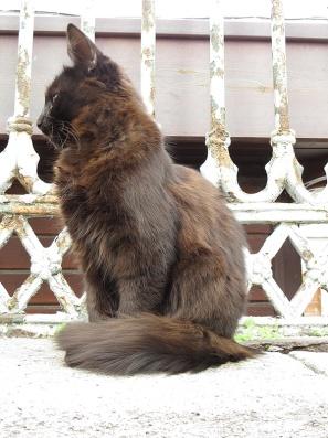 cat-really-pretty