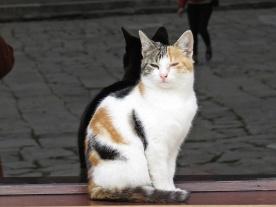 cat-so-proud