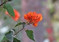 garden-beauty