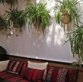 indoor-greenery