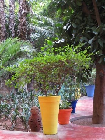 lush-greenery