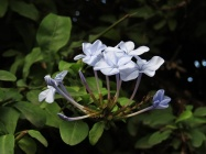 petite-blue