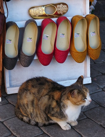 shoes-and-cat