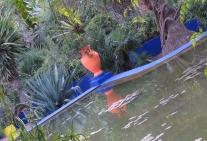 the-big-pond