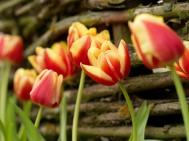 Leen van Der Mark @gardenia.net