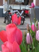street tulips