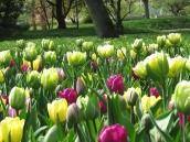 park colours