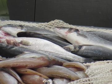 market - sardines
