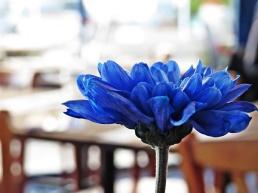 BH - blue flower