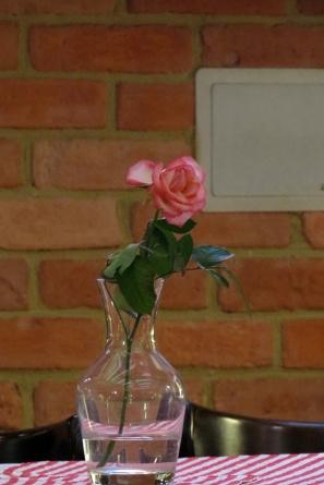 checky rose