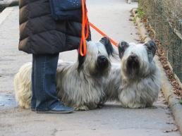 lovely dogs