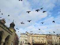 market - birds