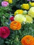 pretty and colorful