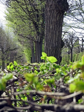 SB spring greens