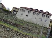 village vineyard