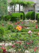 pc - rose garden