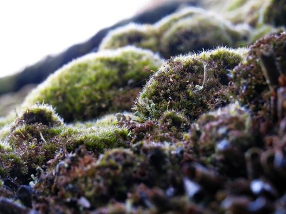 roof moss