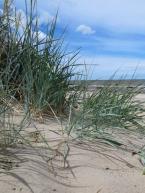 fine sand