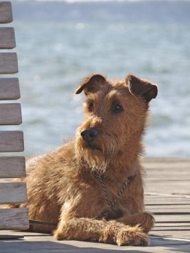 beautiful doggy