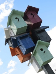 bird collective