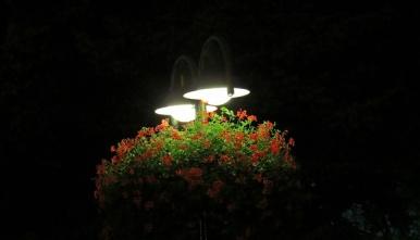 flower & lamps