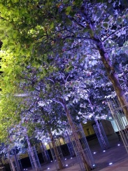 pretty trees