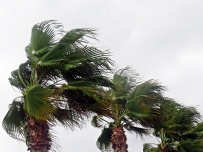 wind in the palm trees