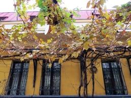 wine leafs