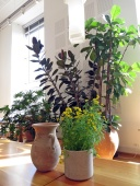 cafe greenery