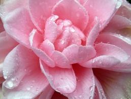 wet beauty