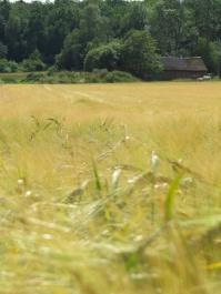 field 7