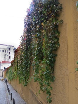 embassy wall