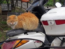 taken the back seat